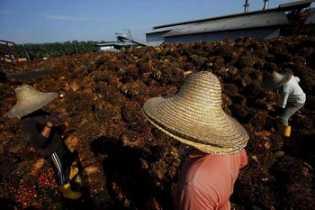 Harga TBS Sawit Riau Turun 4,58 Persen untuk 11 hingga 17 Maret