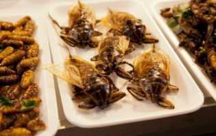 Prancis Kembangkan Serangga sebagai Sumber Nutrisi Ramah Lingkungan