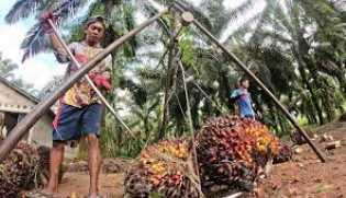 Jika Sawit Dilarang, Dunia Akan Kehilangan Ratusan Juta Hektare Lahan