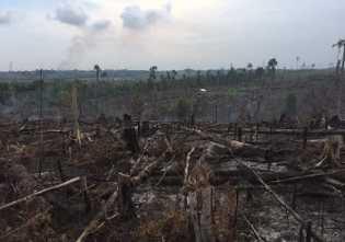 Balai Taman Nasional Tesso Nilo Jelaskan Area Terdampak Karhutla Riau