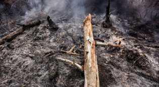 Polisi Tangkap Seorang Pelaku Dugaan Pembakaran Lahan di Riau