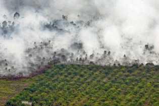 Polda Riau Tetapkan PT Teso Indah dan Asisten Kebun Sebagai Tersangka Pembakaran Hutan dan Lahan