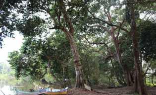 Hutan Buluhcina, Lahir dari Kearifan Lokal