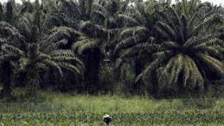 Riau Lanjutkan Perjuangan Dapatkan Dana Bagi Hasil Sawit dari Pusat