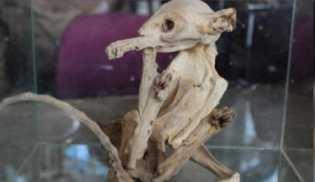 Mumi Makhluk Misterius Ditemukan di Turki, Mirip Alien?