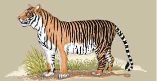 Harimau Muncul di Ladang Minyak Siak, Ini yang Dilakukan Chevron
