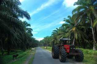 Penyaluran Bantuan Kemitraan dan Bina Lingkungan PTPN V Capai Rp10 Miliar