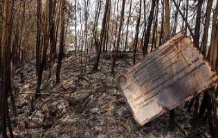 Polda Riau Tetapkan 31 Tersangka Kebakaran Hutan