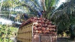 Harga Sawit Riau Meroket, Dewan Wanti-wanti Jangan Sampai Dihancurkan Covid-19