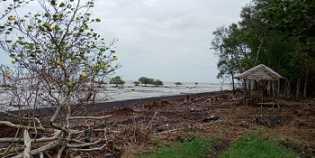 Pantai Tanjung Bengkalis Diperkenalkan
