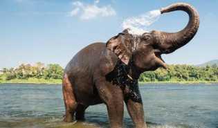 Empat Gajah Berkeliaran di Kelurahan Peranap