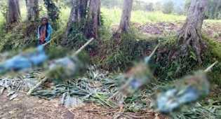 Ngerinya Pembantaian di PNG, Korban Ditembak, Ditikam Lalu Dimutilasi