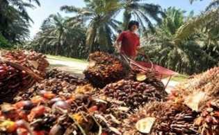 Ekspor Minyak Sawit ke India Diprediksi Masih Kuat